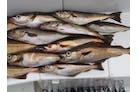 Hvitfisk Ingres