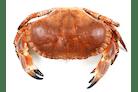 Krabbe Ovenfra Liten